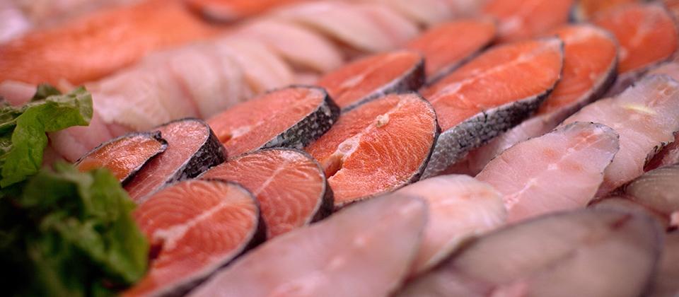 pescados1